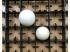 Khay trứng Máy ấp trứng Bách Khoa